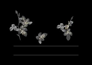Microblading – Beau Visage